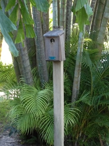Nest box with baby Great Crested Flycatcher.   Photo by Tara Powers